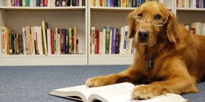 Read to the Dog @ Canby Public Library